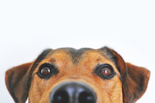 The Mental Power Of Owning A Pet